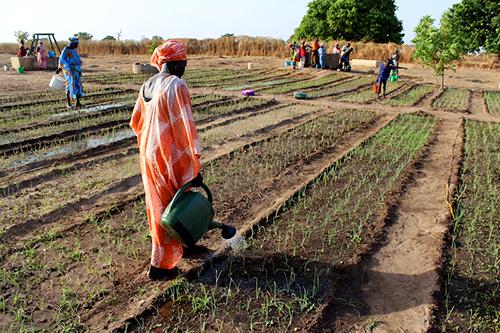 namibia-farmers 7b2c5